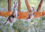 kangaroo, Helen, age:7