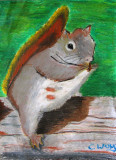 squirrel, Christy, age:12.5