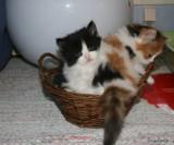 Priskilla & Petra