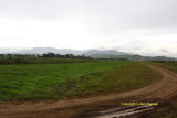 Looking north from mid airstrip with Kitanglad Range in the background