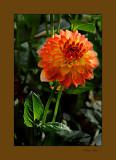 flower0808 03_tn.jpg