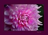 flower 08 02 purple_tn.jpg