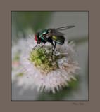flower fly yard 2008 1_tn.jpg