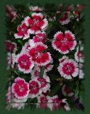 flowers 08 red_tn.jpg