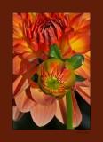 orange and green flowers 0808_tn.jpg