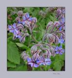 flowers14-24_tn.jpg