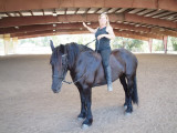 Riding the Friesians