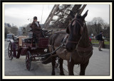 Paris, Horse and Carriage Ride