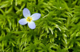 Bluet and Moss