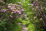 Craggy Gardens 11