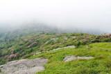 Roan Mountain 9