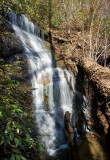 Wild Hog Creek 4