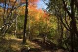 Graveyard Fields Trail 1