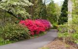 Biltmore Gardens 7