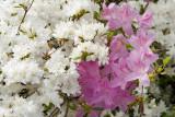 Biltmore Gardens 16