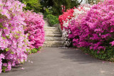 Biltmore Gardens 17