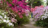 Biltmore Gardens 23