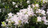 Biltmore Gardens 24