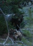IMG_0053-Bear.jpg