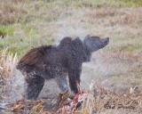 0003-Bear-Spray.jpg