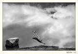 20100422_Banff_0051.jpg