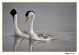 Birds 2010
