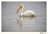 20100508_Bear River_0843.jpg