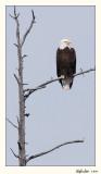 20100521_Yellowstone_0043.jpg