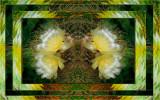 Cactus Intimacy