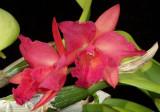 Jewel Box 'Sheherazade'