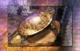 Pet Shop Turtle