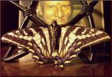 Niz Moth