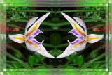 Iris Mudra