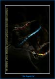 YN6Y44692-copy-b.jpg