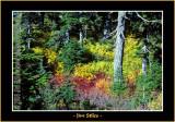 Autumn_0044-copy-b.jpg
