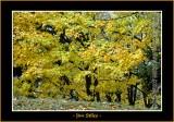 Autumn_0062-copy-b.jpg