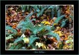 Autumn_0105-copy-b.jpg