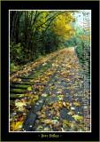 Autumn_0107-copy-b.jpg