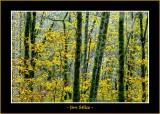 Autumn_0119-copy-b.jpg