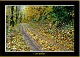 Autumn_0129-copy-b.jpg