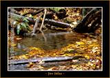 Autumn_0136-copy-b.jpg