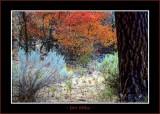 Autumn_0255-copy-b.jpg