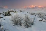 Winter sage and sunrise