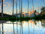 Pond scene.jpg