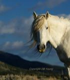The American Wild Horse.jpg