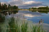 Spring pond small_filtered.jpg
