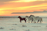 Sunset and horses.