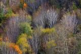 Late Fall Trees - Smith River, Oregon