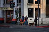 Dog Lovers - Sebastapol, California