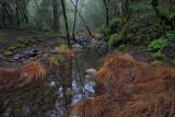 Foggy Reflections - Sugarloaf  Ridge State Park, California